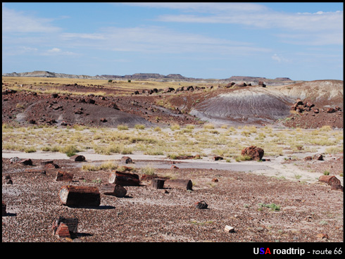 Petrified National Park